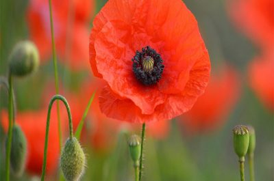 The Centenary of Armistice