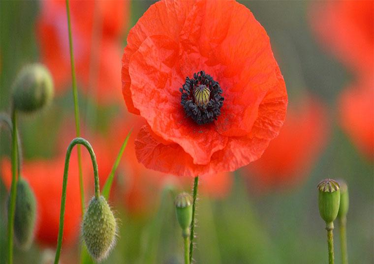 The Centenary of Armistice