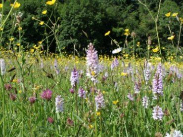 The Queen's Coronation Meadows.
